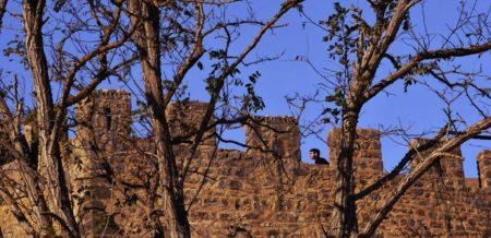 Silver Coast Travelling, as muralhas do Castelo, Obidos