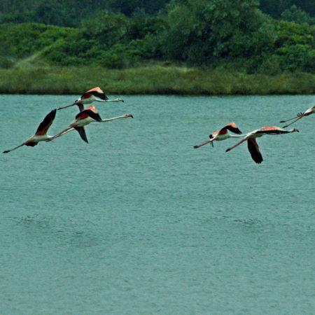 Lagoa de Obidos Silver Coast Travelling Tours Portugal Travessia da Lagoa de Obidos de Barco com Piquenique