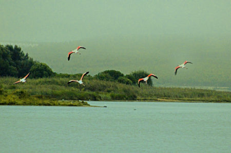Silver Coast Travelling Tours 2018 Flamingos Travessia da Lagoa de Obidos de Barco com Piquenique