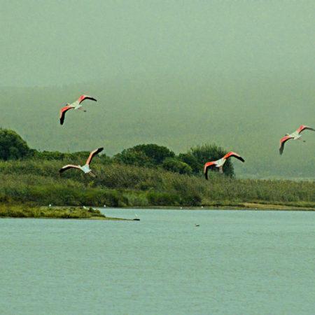 Silver Coast Travelling Tours 2018 Flamingos Travessia da Lagoa de Obidos de Barco com Piquenique